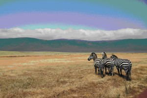 Even the zebras are interested! Photo by Candy Fresacher